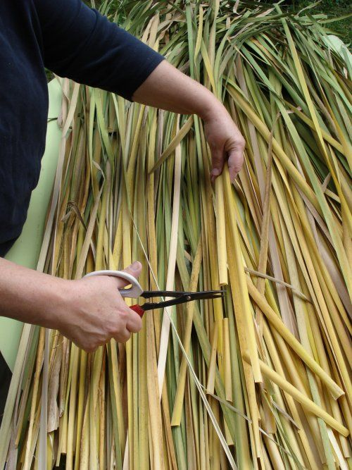 How-to process cattail leaves for weaving projects.
