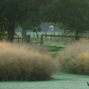 Grassentuin - Chris Ghyselen - tuinarchitect