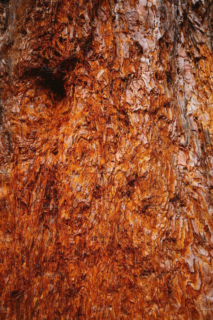 Tree trunk texture by OSORIOartist on @creativemarket