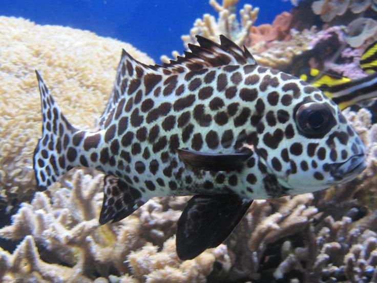 Image Result For Waikiki Aquarium