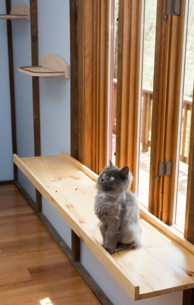 1000 images about cat perch on pinterest cat window. Black Bedroom Furniture Sets. Home Design Ideas