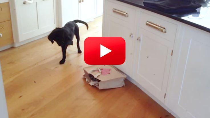 Cat Hits Dog For No Reason