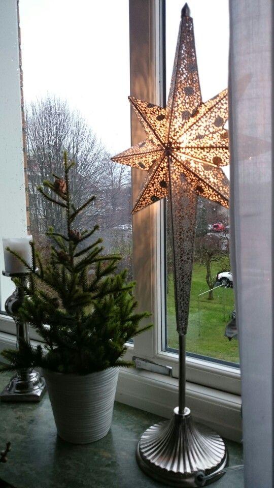 Nya adventsstjärnan och finfina kottar till granen