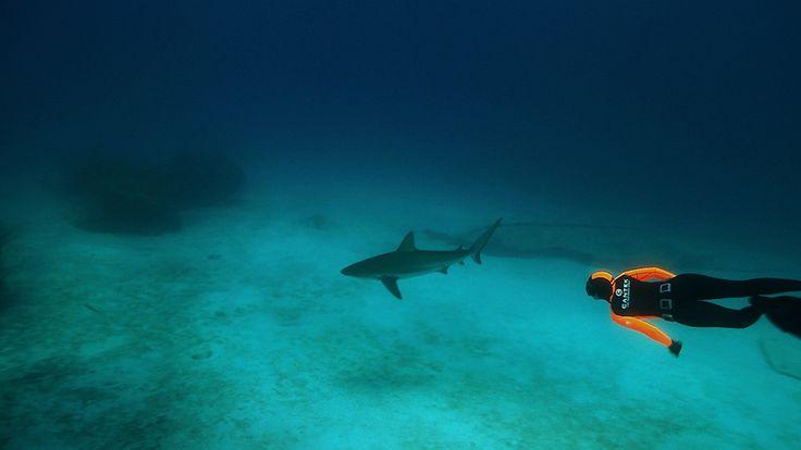 Dünya serbest dalış rekortmeni Yasemin Dalkılıç, 'Dünyanın İnanılmaz Dalışları' belgeselin yeni bölümünün ilk çekimleri için Atlas Okyanusu'nda Bahamalar'da dalış yaptı. Dalkılıç,'Köpekbalığı Geçidi' ve 'Okyanusun Dili' adıyla bilinen yerlerdeki tüpsüz dalışlarını 'Enerjini Doğru Kullan' temasıyla 6 bölümden oluşan belgesel için gerçekleştirdi...  http://zamanfransa.com/haber/spor/yasemin-dalkilic-belgesel-icin-bahamalar-da-tupsuz-dalis-yapti.html