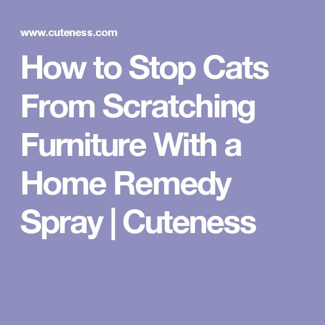 How To Stop Cats From Scratching Furniture Home Remedy