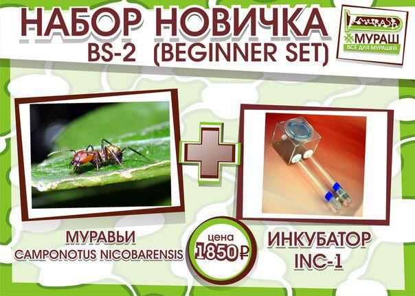 Набор новичка BS-2