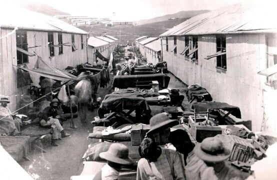 Boer POW's sunning their bedding in Diyatalawa Camp Ceylon to drive the Jerusalem ponies etc out......ABW