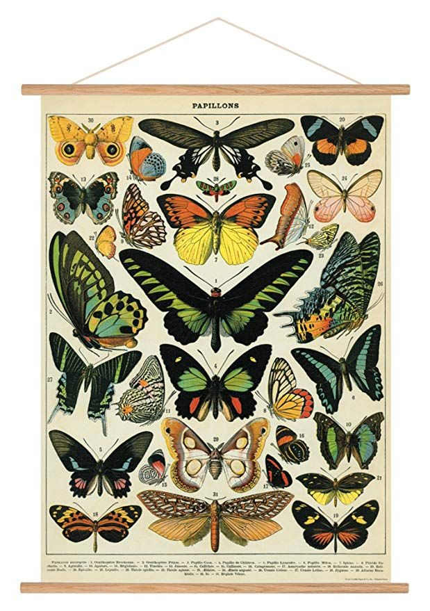 24 99 Amazon Cavallini Vintage Butterflies Hanging Poster Kit Butterfly Poster Butterfly Illustration Butterfly Wall Art