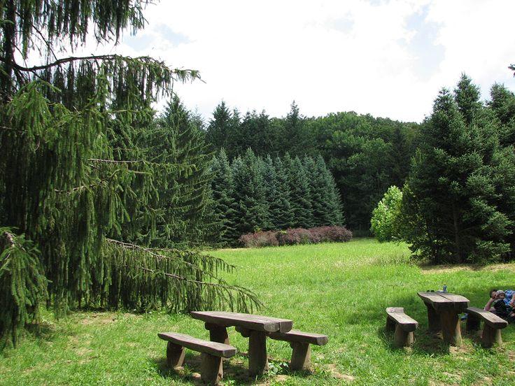 Agostyáni Arborétum (Tata közelében 5.7 km) http://www.turabazis.hu/latnivalok_ismerteto_4562 #latnivalo #tata #turabazis #hungary #magyarorszag #travel #tura #turista #kirandulas