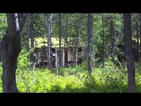 ▶ Swiftcurrent Motor Inn - YouTube