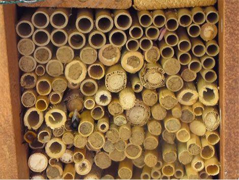 wildbienenhotel selber bauen anleitung bees pinterest bienen hotel bienen and insektenhotel. Black Bedroom Furniture Sets. Home Design Ideas