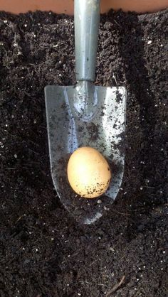 Place a raw egg in soil beneath tomato plants. Per Bonnie Plants...they say it works.: