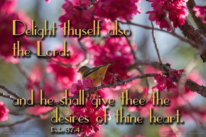 4 Delight thyself also in the LORD; and he shall give thee the desires of thine heart. 5 Commit thy way unto the LORD; trust also in him; and he shall bring it to pass.--Psalm 37:4-5 KJV    http://ift.tt/2dlIsJq  #Bible #inspirational #Psalms
