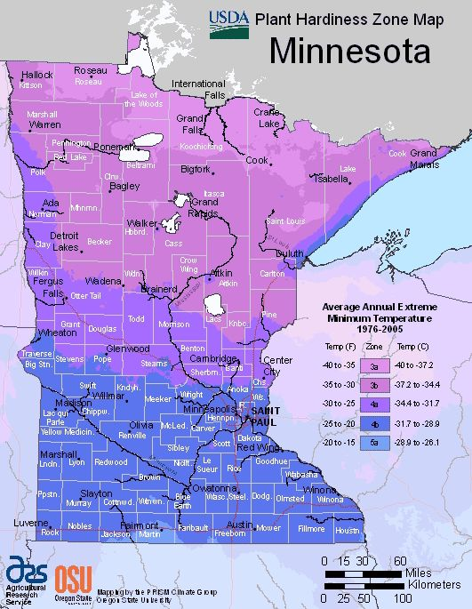 Minnesota hardiness zones map to help you decide which plants are best suited for your organic for What garden zone am i