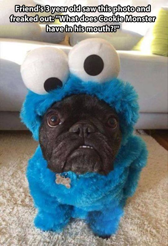 Strange Cookie Monster // funny pictures - funny photos - funny images - funny pics - funny quotes - #lol #humor #funnypictures