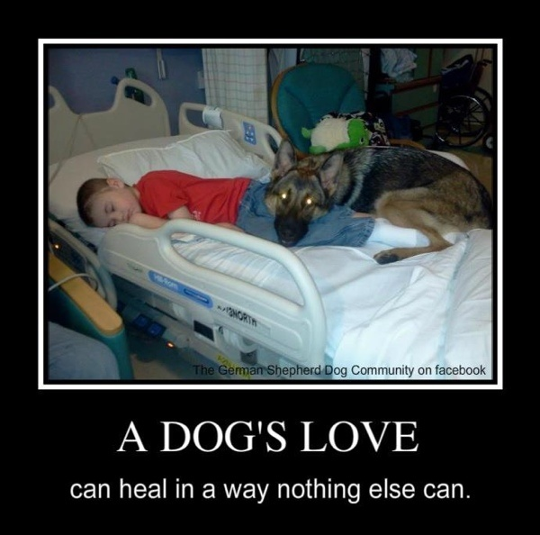 Animals are amazing!  Especially love German shepards!