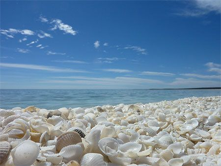 Shell Beach, Australia.....a beach with shells instead of sand! http://GreatEscapesOnline.net