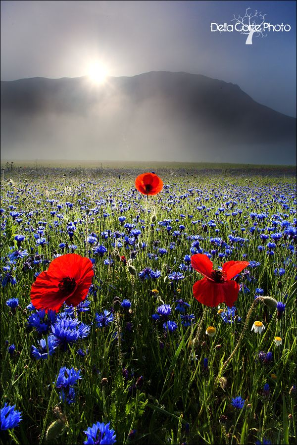 "▪▪Three red brilliance in a sea of blue... while the sun peeks through▪▪ ""Prime Luci"" by Alfonso Della Corte"