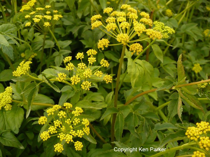 78 Best Images About Michigan Native Plants On Pinterest
