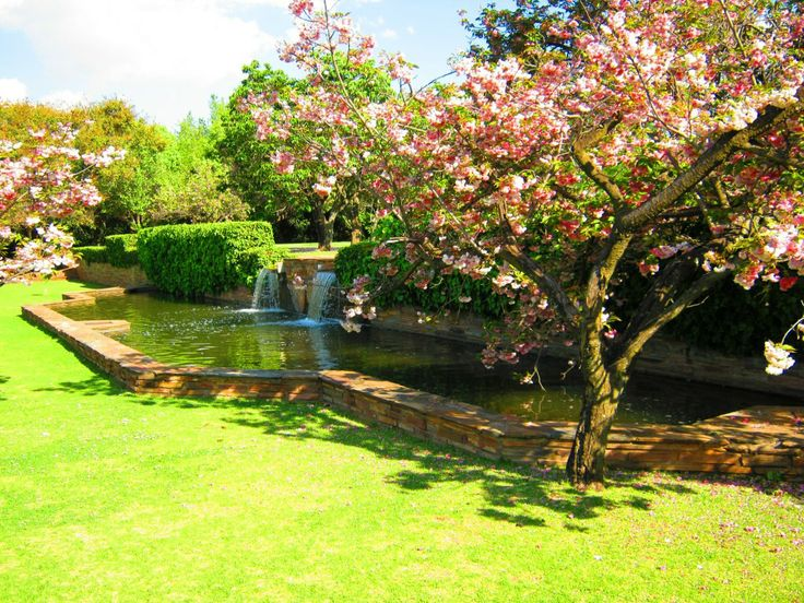 Blossoms and pools in the Johannesburg Botanical Gardens