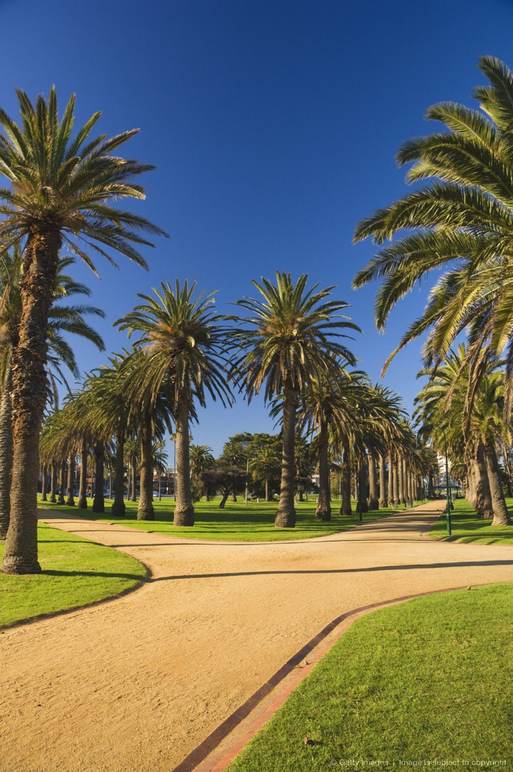 Palm Trees, St Kilda, Melbourne.