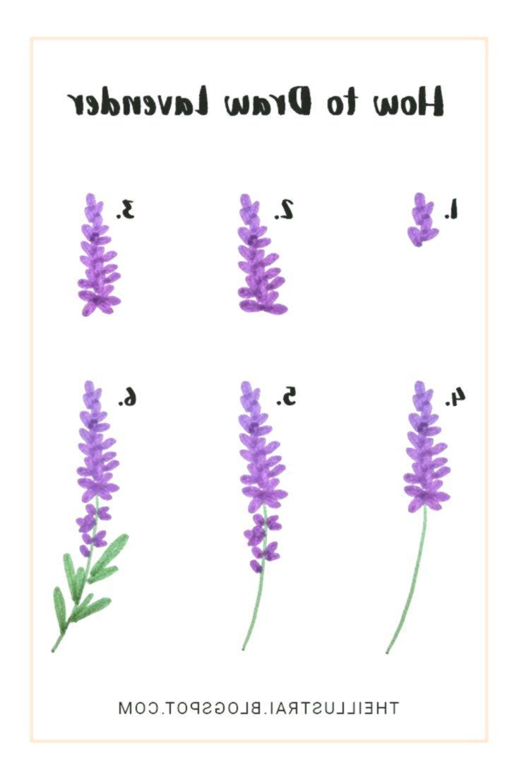 How To Draw Lavender In 6 Easy Steps Draw Easy Draw Easy Howtobe Lavender Steps Bullet Journal Doodles Flower Drawing Journal Doodles