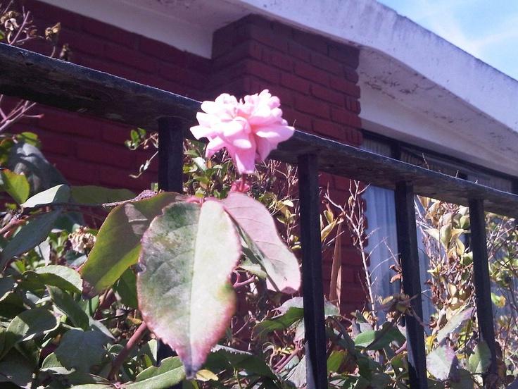 Flores donde mi abuela, Villa Alemana