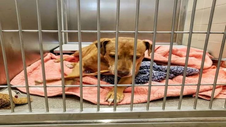 Lost Dog Never Picked Up By Family At Shelter Has Been