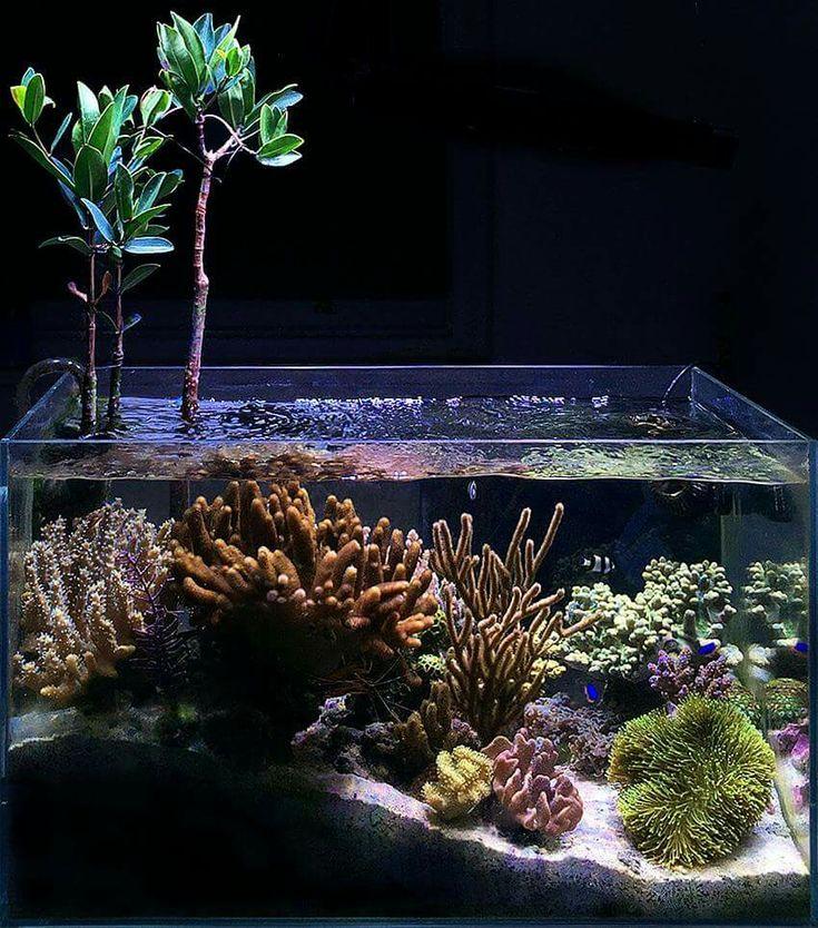 1466 besten saltwater bilder auf pinterest aquarien. Black Bedroom Furniture Sets. Home Design Ideas