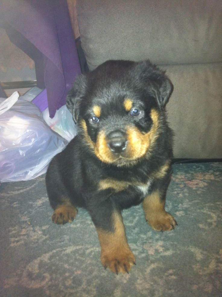 Tank as a baby