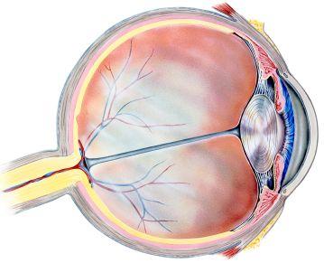 Retina Surgery