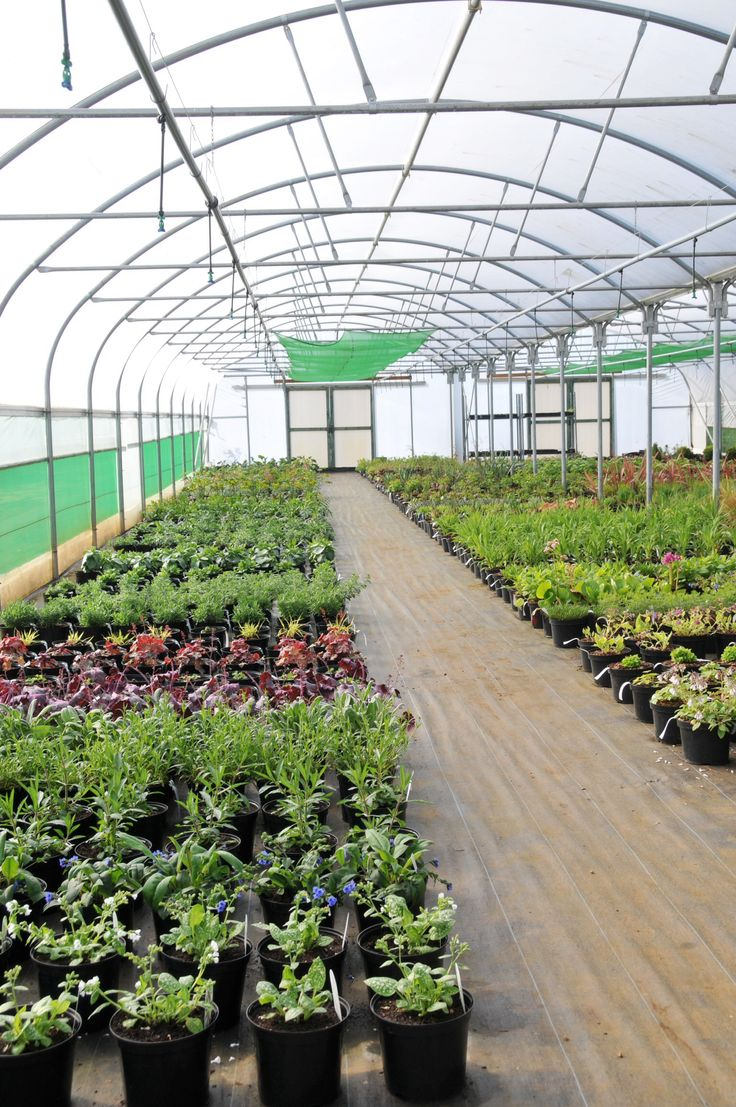 Plant nursery early summer