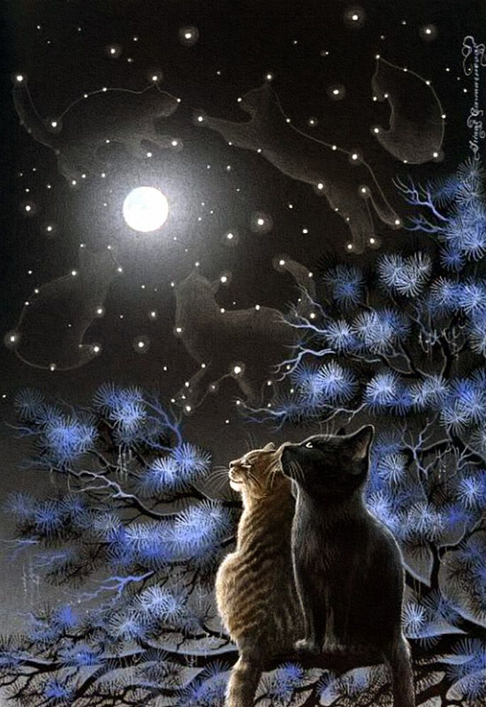 **cats looking at the moon
