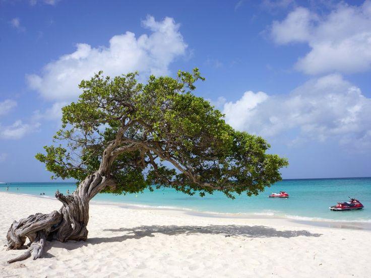 Karibikinsel Aruba: Traumstrände und heiße Schnecken - SPIEGEL ONLINE