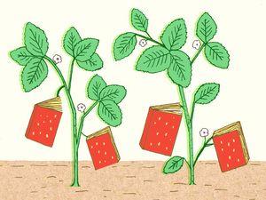 Plant Eater's Paradise http://www.npr.org/2012/05/14/152694515/plant-eaters-paradise-2012s-best-summer-cookbooks#