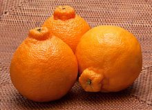 dekopon... in the u.s. it is called a sumo tangerine... sooooo good... only here for a little while, then gone...