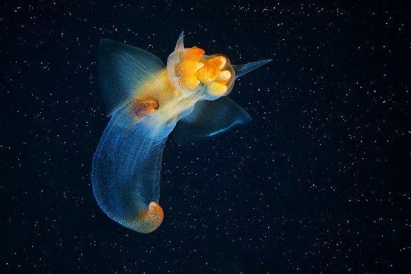 White Sea Biological Station: le creature degli abissi fotografate da Alexander Semenov Untitled Document