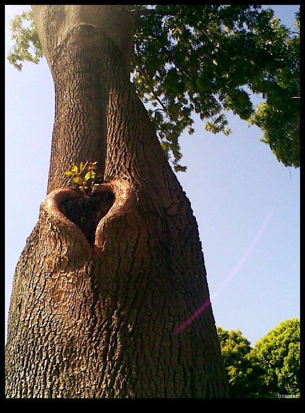 ♥ Tree heart