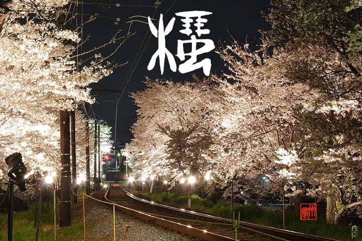 「桜」  ライトアップされた桜回廊は圧巻です。春ももう少し。。。