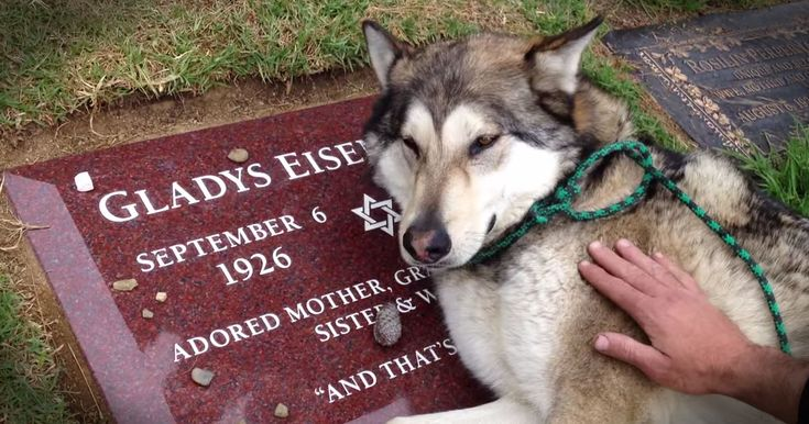Heartbroken Loyal Dog Cries on Owners Grave - Incredibly Touching