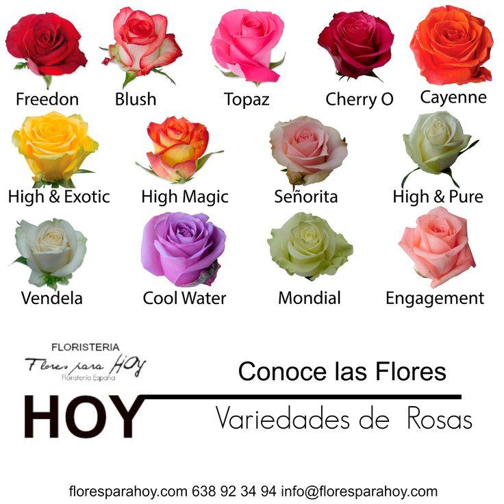 10 best tipos de flores images on pinterest types of - Clase de flores y sus nombres ...