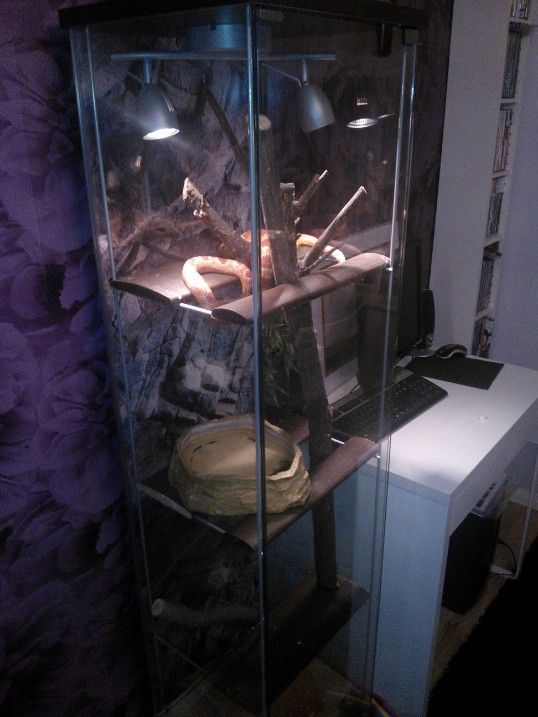 17 Best Images About Diy Reptile Cages On Pinterest