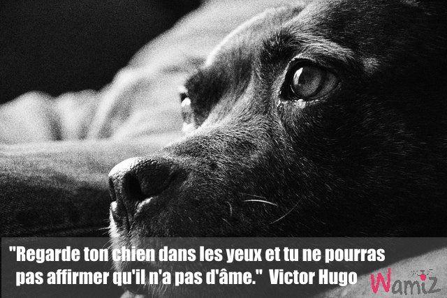"""""""Regarde ton chien dans les yeux et tu ne pourras pas affirmer qu'il n'a pas d'âme"""" - Victor Hugo"""