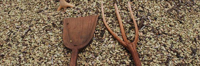 Carpino Broad Beans - Puglia | Italian Presidia | Slow Food Foundation for Biodiversity