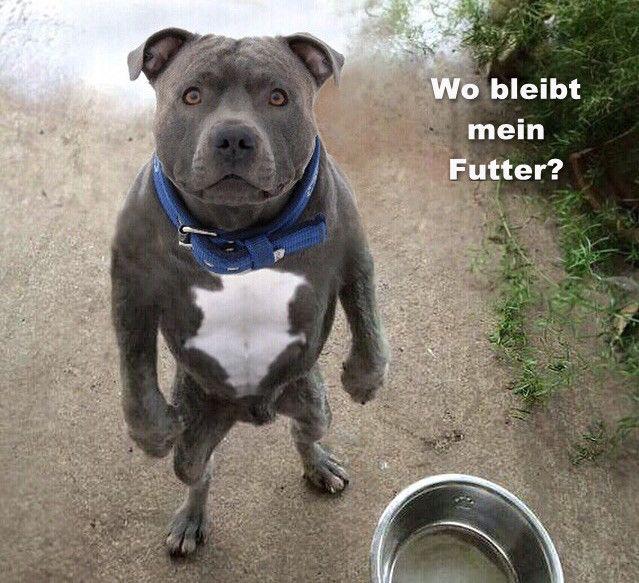 funpot: futter.jpg von Funny53