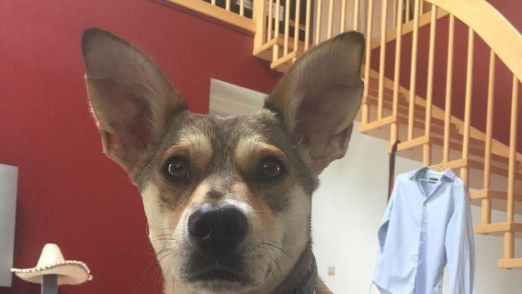 Petition · Fichier National d'Identification des Carnivores Domestiques: Pour le droit des chiens, pour une justice des affaires animales, contre l'abandon. · Change.org