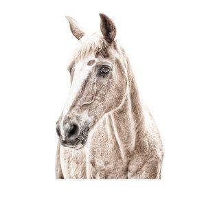 Carta da parati magnetica grande Cavallo