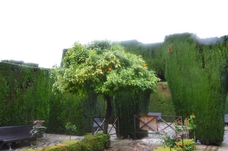 Alhambra - varázslatos kertje - Anett Szilvási-Zupkó - Picasa Webalbumok