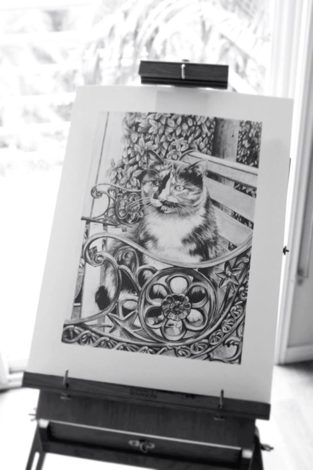 Sitting cat portrait drawing.  Amy Peters-Artist Facebook