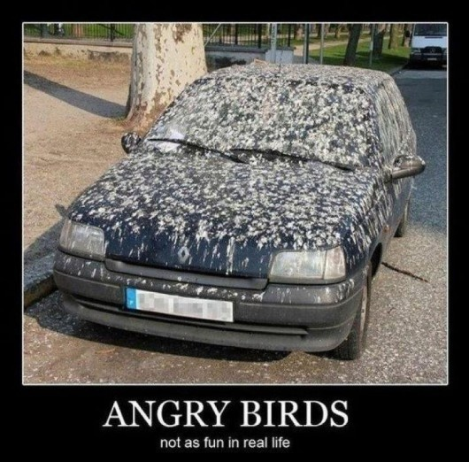apparently not.: Funny Things, Real Life, The Real, Cars, Giggl, Funny Stuff, Real Angry, Smile, Angry Birds
